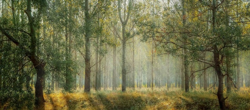 165 Bäume müssen gefällt werden