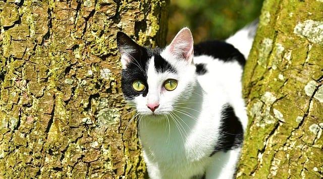 Registrierungs- und Kastrationspflicht für Katzen