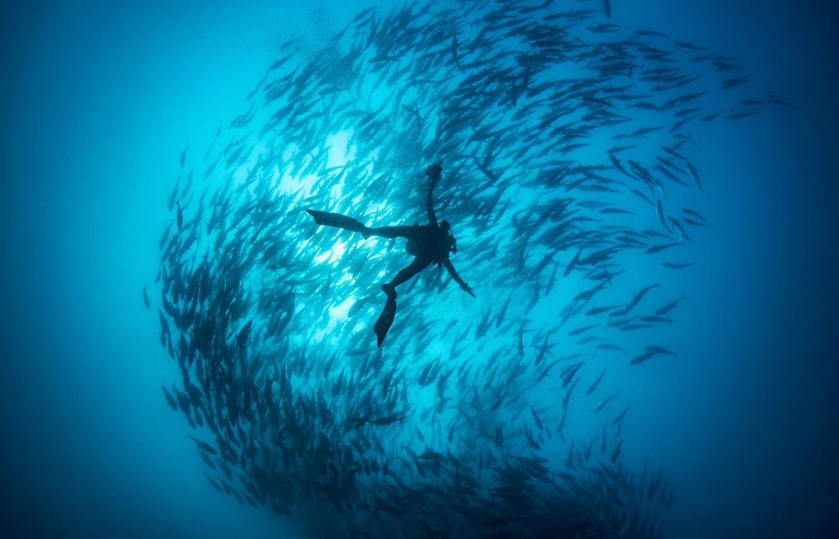"""Aquazoo Löbbecke Museum  """"Blaue Savanne"""" – Expedition in die Unterwasserwelt Afrikas"""